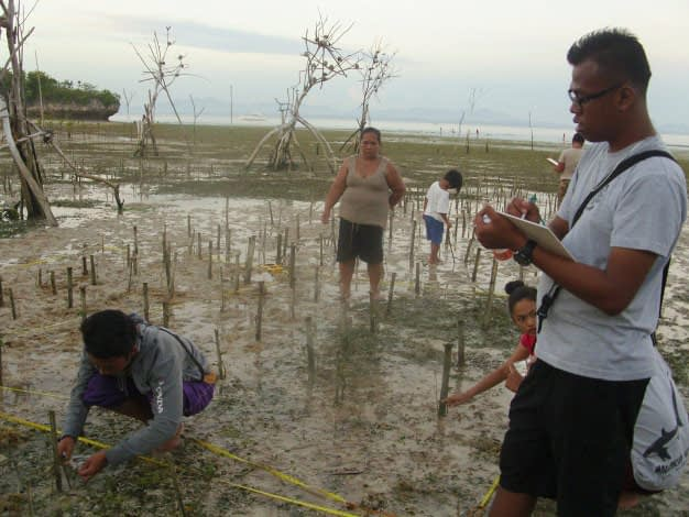mangroves are an essential element of marine conservation in the Philippines