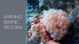 Benthic life form1